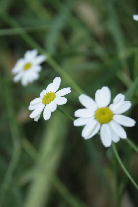 زیباترین خلقت خدا   تصاویر گلها